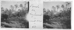 060 PP ALGERIE L'Oasis De LAGHOUAT - Avril 1930 - Glass Slides