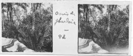 082 PP ALGERIE Oasis De GHARDAÏA - Glass Slides