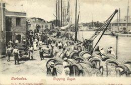 Barbados B.W.I., Shipping Sugar, Harbour Scene (1910s) Postcard - Barbados
