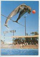 Dauphin :  Saut Groupé De Dauphins (n°131) Antibes : Marineland Spectacle (ballon) - Dauphins