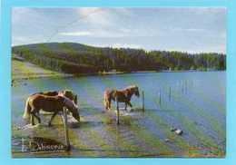 FRANCIS  DEBAISIEUX  Lac Serviere-chevaux à L'abreuvoir-cpm Francis Debaisieux - Illustrators & Photographers