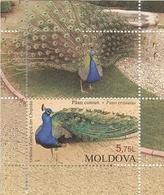 Block Of Stamps Of Moldova - Chisinau Zoo - Peacock (Pavo Cristatus)   - 2013 UNC - Moldova