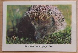 USSR Pocket Calendar 1977 Fauna Hedgehog #53.2 - Calendars