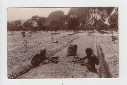 SOMALIE Ou ERYTHREE / DANS LES PLANTATIONS - EDITION RAJAR - Somalia