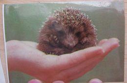 USSR Pocket Calendar 1992 Fauna Hedgehog #53.5 - Calendars