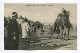 Un Combat De Chameaux - Kairouan - Tunisia