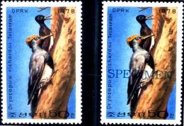 BIRDS-WHITE BELLIED WOOD PECKER-NORTH KOREA-1978-WITH SPECIMEN-SCARCE-MNH-B9-705 - Climbing Birds