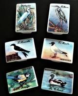 6 Fèves D'oiseaux Signées C. Le Borgne - Animals