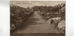 Postcard - Sandringham Herbaceous Border - No Card No. - Unused Very Good+ - Unclassified