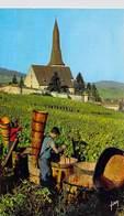68 - Vendanges Animée En Alsace Vigne Vin Raisin Hunawihr (ticket D'entrée Collé Au Dos) - France