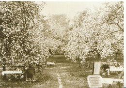 Cambridgeshire Postcard - The Ochard In Bloom - Grantchester - Cambridge - Ref ND322 - Cambridge