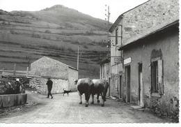 11 Aude Touristique Counozouls Alt 950 M La Poste TTBE - Other Municipalities