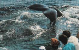 Massachusetts Cape Cod Provincetown Dolphin Fleet Whale Watching - Cape Cod