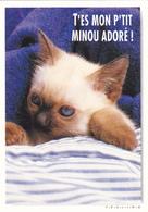 CARTE NEUVE @ CHAT Au Dodo - Edition FEELING -  T'es Mon P'tit Minou Adoré ! - Katzen