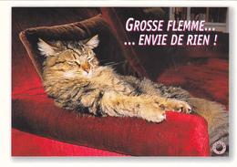 CARTE NEUVE @ CHAT Au Canapé Fauteuil - Edition FEELING -  Grosse Flemme ... Envie De Rien ! - Katzen
