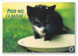 CARTE NEUVE @ CHAT - Edition FEELING - Pour Moi ça Baigne ! ça Patauge Dans Le Lait ! (ou La Semoule) - Katzen