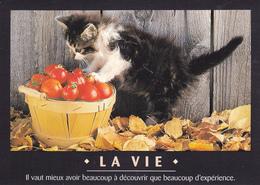 CARTE NEUVE @ CHAT - Edition FEELING - Il Vaut Mieux Avoir Beaucoup à Découvrir Que Beaucoup D'expérience. La Vie - Katzen