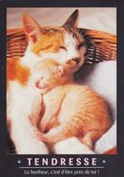 CARTE NEUVE @ CHAT - Edition FEELING - TENDRESSE - Le Bonheur C'est D'être Près De Toi ! - Katzen