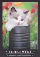 CARTE NEUVE @ CHAT - Edition FEELING - FIDELEMENT - Pas Une Journée Sans Une Pensée Pour Toi ! - Katzen
