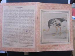COUVERTURE CAHIER  - LES OISEAUX - L'AUTRUCHE - Garnier Frères éditeurs - Animals