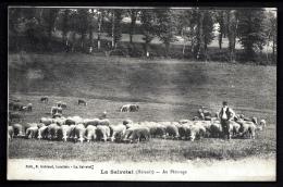 CPA ANCIENNE FRANCE- LA SALVETAT (34)- TROUPEAU DE MOUTONS AVEC BERGER GROS PLAN AU PATURAGE- - La Salvetat