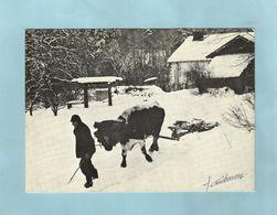 Attelage Vache Chasse Neige 1978 - Teams