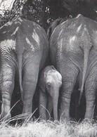 Uganda - Game Park , Elephant - Uganda
