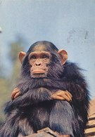 Uganda Tanzania Kenya African Fauna Monkey 1972 Nice Stamp - Uganda