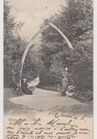 Whale Bones - Dover - 1903 - Dover