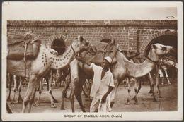 Group Of Camels, Aden, C.1930s - Howard RP Postcard - Yemen