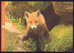 Belarus 2014 Fauna  Fox - Animaux & Faune