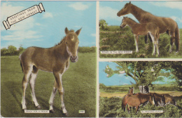 Postcard - The New Forest - 3 Views With Horses - Card No. 4980 - VG - Unclassified