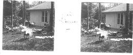 PP 19 - JEUX OLYMPIQUES DE MUNICH 1936 Village Olympique  Après Déjeuner - Glass Slides