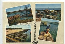 Bassin D'Arcachon : L' Multivues Les Parcs à Huitres Les Champs Et Le Parquage (n°259) Ostréiculture - Fishing