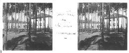 PP 30 - JEUX OLYMPIQUES DE MUNICH 1936 Quartier De L'Equipe Allemande - Glass Slides