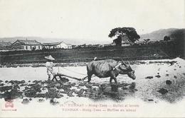 Chine - Yunnan (Yunnay) Mong-Tzeu, Buffles Au Labour - Edition Dieulefils - Carte N° 16 Non Circulée - Chine