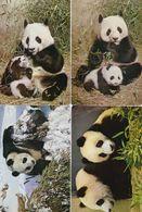 4 Postcards Of Giant Pandas Beijing Zoo 北京 China 1983 - China