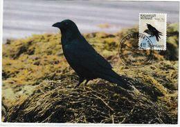 Groenland. Greenland    Corvus Corax.Northern Raven   Carte Maximum Premier Jour. - Other