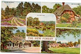Tarjeta Postal The New Forest. - Southampton