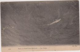 Cpa,seine Et Marne,palais De Fontainebleau En 1916,les Carpes,carte Ancienne ,77 - Fontainebleau