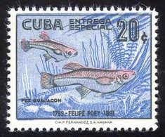 **/*/gest./Beleg Partie Amerikanischer Kontinent Mit Steckkarten Und Alben, Dabei Teils Gute Thematische Ausgaben Cuba,  - Stamps