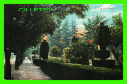 ARBUSTE - TOPIARY INA CYPRES WALK -  TRAVEL IN 1909 - - Autres