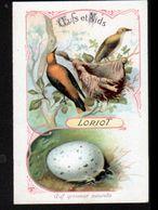 Oeufs Et Nids, Loriot - Chromos