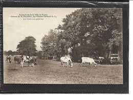 44-NANTES-Ferme-ecole Du Chateau De La PLACELIERE -Les Vaches Au Paturages - Nantes