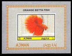 Fish, Betta Splendens, Ajman - Poissons