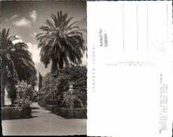 558980,Spain Sevilla Reales Alcazares Jardines Garten Park Palmen - Spanien