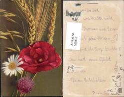 560310,Klatschmohn Mohnblume Margerite Klee Kleeblüte Getreideähre Blumen - Botanik