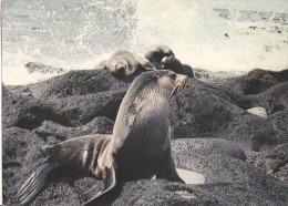Saint-Paul Et Amsterdam Otarie Circulée En 1977 Superbe !!! - TAAF : Terres Australes Antarctiques Françaises