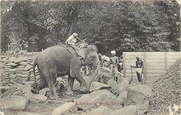 CEYLAN - éléphant Au Travail, Transport De Pierres. - Éléphants