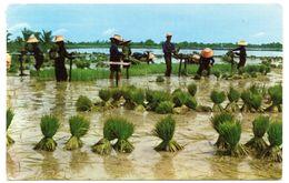 Tarjeta Postal De Circulada De Thailandia Campos. - Tailandia